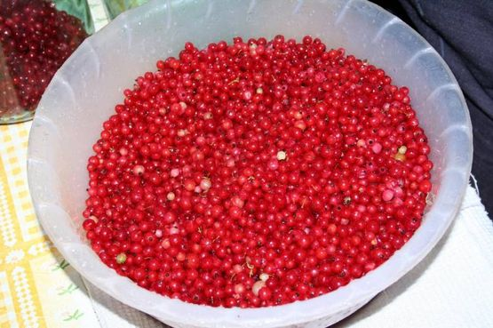 Brusnika lingonberries